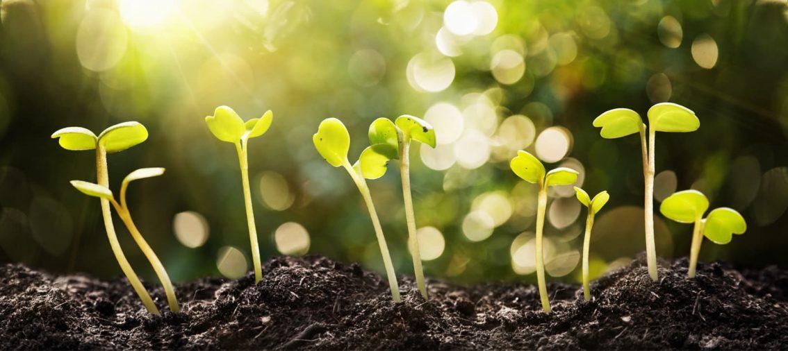 graines poussant en terre